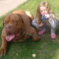 Tin tức - Sốc: Bé 4 tuổi bị chó cưng cắn tới chết
