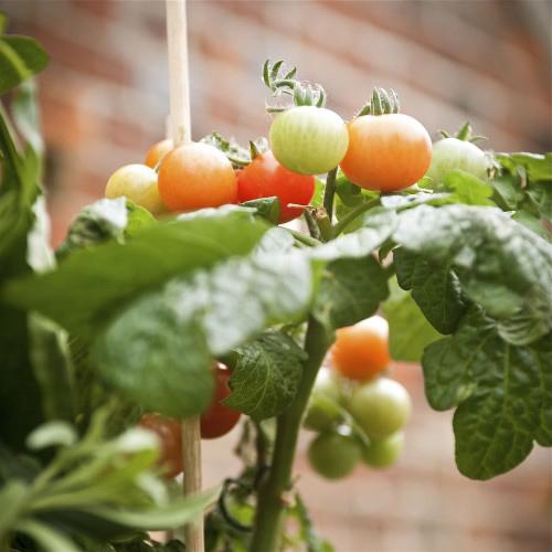 3 loại rau củ dễ trồng tại nhà-3
