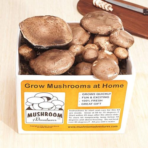 3 loại rau củ dễ trồng tại nhà-8