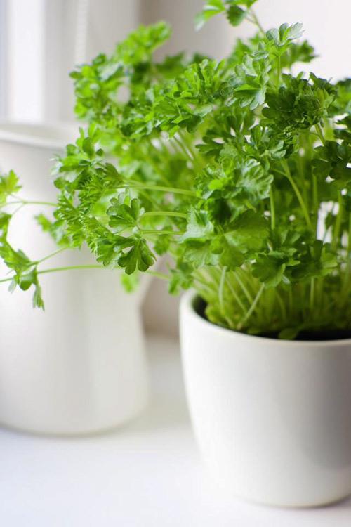 3 loại rau củ dễ trồng tại nhà-4