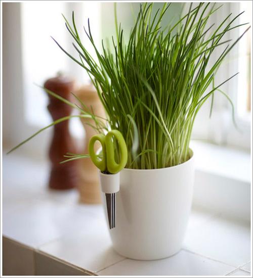 3 loại rau củ dễ trồng tại nhà-5