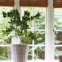 3 loại rau củ dễ trồng tại nhà-9