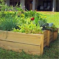 3 loại rau củ dễ trồng tại nhà-12