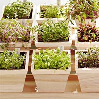 3 loại rau củ dễ trồng tại nhà-13
