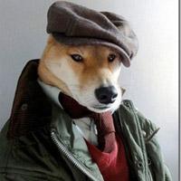 Cười 'đã đời' với hình ảnh độc về chó