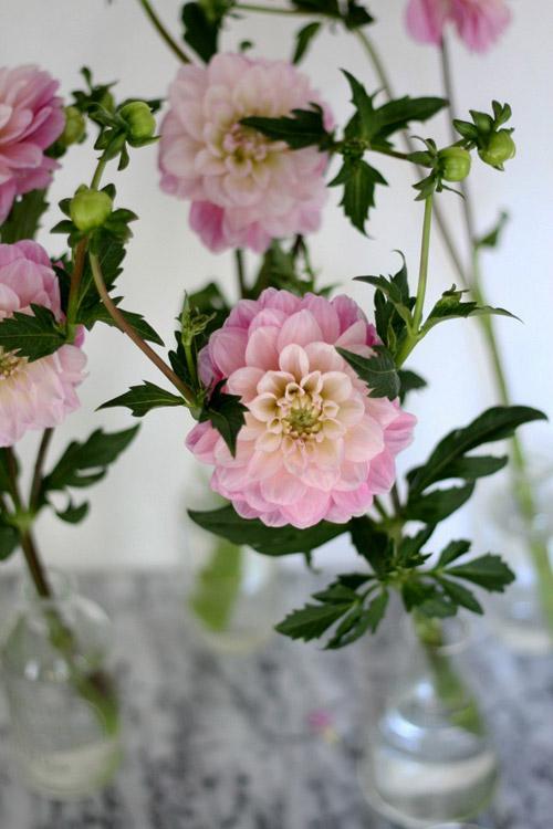 Tặng chị em mẹo cắm hoa tươi lâu - 6