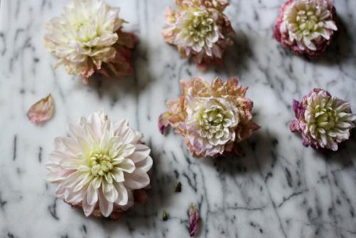 Tặng chị em mẹo cắm hoa tươi lâu - 7