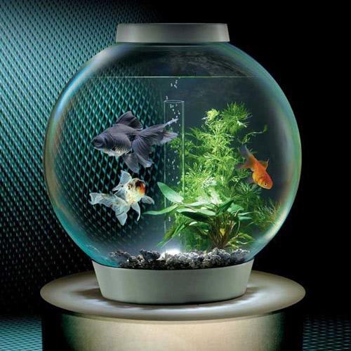 Mẹo vệ sinh bể cá cảnh sạch và đẹp - 4