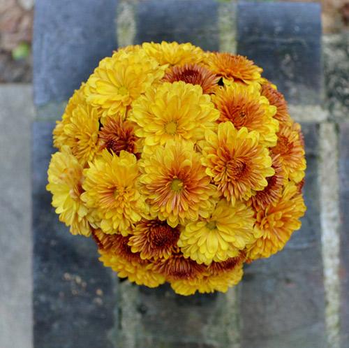 Hướng dẫn cắm hoa cúc để bàn đơn giản trong nháy mắt bước 3