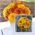 Nhà đẹp - Cắm hoa cúc để bàn đẹp trong 5 phút