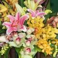Mua sắm - Giá cả - Người Hà Nội tiết giảm tiền mua hoa 20/11