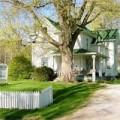Nhà đẹp - Đại kỵ trồng cây to trước nhà?