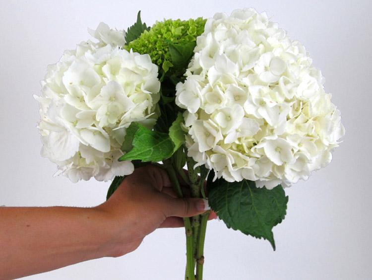 Hướng dẫn cách bó hoa cưới đơn giản từ cẩm tú cầu và hoa hồng bước 1