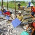 Mua sắm - Giá cả - 2014: Tôm vẫn là thủy sản xuất khẩu chủ lực