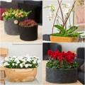 Nhà đẹp - 10 loại hoa cảnh lý tưởng cho nhà đẹp