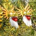 Nhà đẹp - Vựa hoa miền Tây trước ngày ra chợ Tết