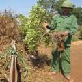 Mua sắm - Giá cả - Quất rụng trái, nông dân thiệt hại nặng