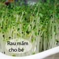 Làm mẹ - Mẹ Việt 'sốt' trồng rau mầm không cần đất