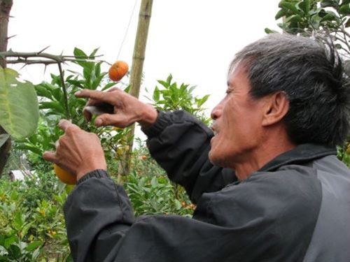 san lung cay bay loai qua gia 'khung' don tet - 1