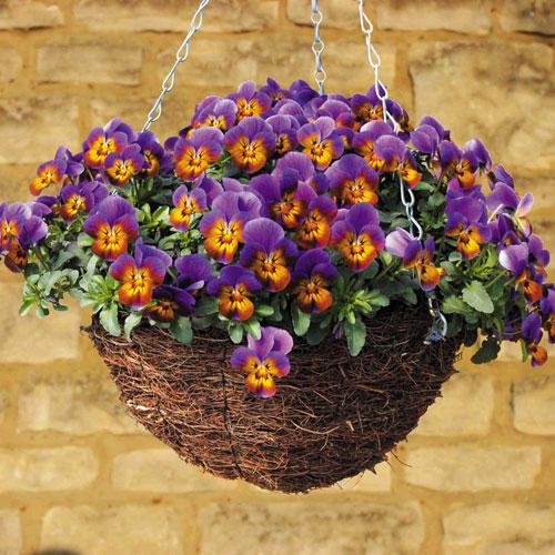 7 loài hoa tuyệt đẹp tô điểm ban công - 12
