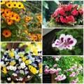 Nhà đẹp - 7 loài hoa tuyệt đẹp tô điểm ban công