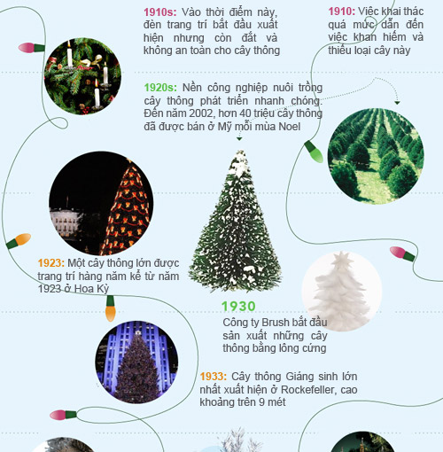 infographic: lich su 400 nam cua cay thong noel - 2