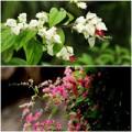 Nhà đẹp - Chọn giàn hoa leo đẹp cho nhà phố