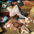 Mua sắm - Giá cả - Thịt, cá sơ chế trên cống nước thải, nước rửa cực bẩn