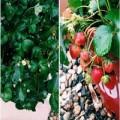 Nhà đẹp - Top rau sạch gây 'sốt' chị em năm 2013