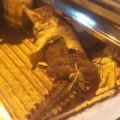 Tin tức - TP HCM: Cá sấu rơi giữa đường Nguyễn Thị Minh Khai