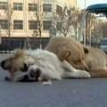Tin tức - Xúc động clip chó canh xác bạn suốt đêm lạnh