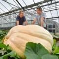 Tin tức - Choáng với quả bí ngô khổng lồ nặng 726kg