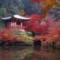 Đi đâu - Xem gì - Choáng ngợp mùa lá đỏ ở Kyoto