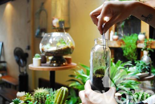 Thiết kế một cái lọ kính bằng thuy tinh để trồng cây thật sự là đơn giản