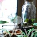 Nhà đẹp - Terrarium: Học cách tự trồng cây trong bình kính