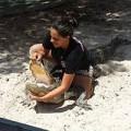 Bà bầu - Sốc: Bầu 7 tháng vẫn bơi cùng cá sấu