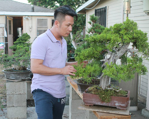 vuon bonsai tien ty o my cua bang kieu - 4