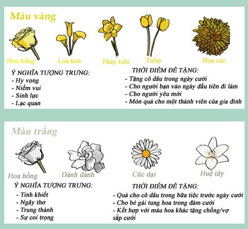 infographic: bieu tuong va y nghia cac loai hoa - 3