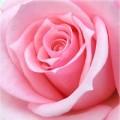 Nhà đẹp - Infographic: Biểu tượng và ý nghĩa các loại hoa