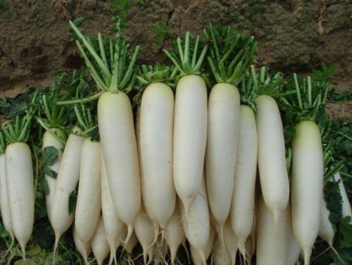 tang kha nang mien dich trong mua dong bang rau xanh - 2