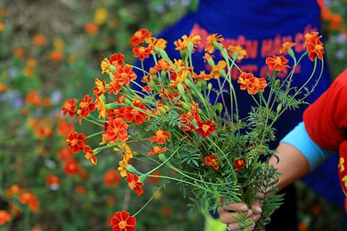 ha giang dep quyen ru mua hoa no tren da - 13