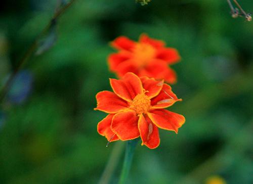 ha giang dep quyen ru mua hoa no tren da - 11
