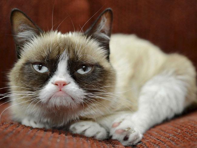 1. Một con vật cưng bốc mùi  Bỗng dưng có khách đến chơivà bạn đột nhiên nhận ra chú chó hoặc mèo của bạn có mùi không mấydễ chịu. Trong thời gian ngắn không kịp tắm cho chúng thì bạn hãy nhẹ nhàng rắc baking soda lên lông, chà xát trong một vài phút và phủi sạch. Những chú thú cưng sẽ bay hết mùi hôi khó chịu.