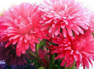 nhung loai hoa de trong, de song khi dong den - 8