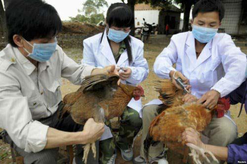 chua phat hien virus cum a/h5n8 tai viet nam - 1