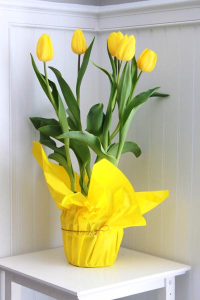 5 buoc trong tulip no dung dot tet ve - 15