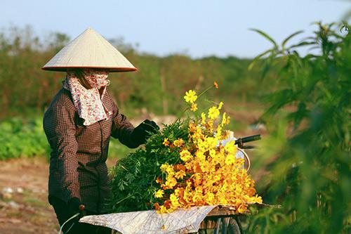 mong manh hoa canh buom khoe sac dau dong - 14