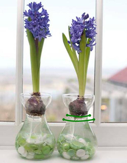 trong hoa tien ong khong kho, mang an khang den nha - 6