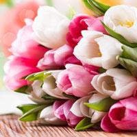 trong hoa tien ong khong kho, mang an khang den nha - 12