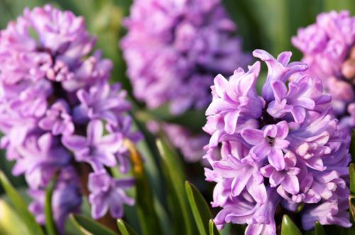 trong hoa tien ong khong kho, mang an khang den nha - 8
